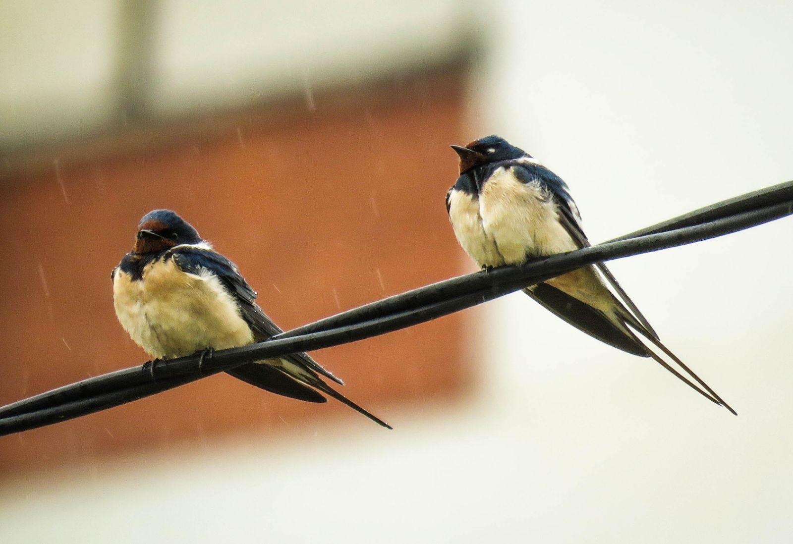 Laste preživele mraz i sneg, ako ih ugledate promrzle, ugrejte ptice
